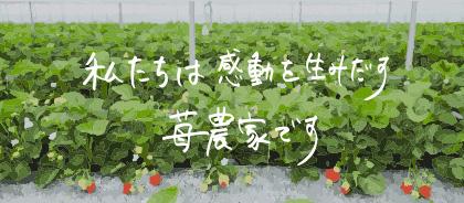 私たちは感動を生み出す苺農家です